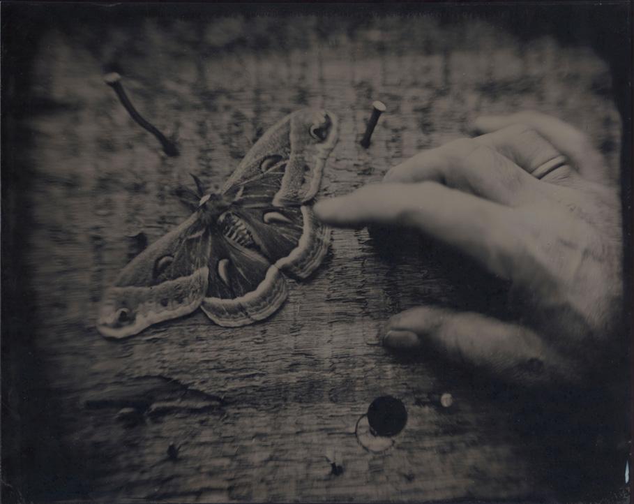 Tintype by David Prifti